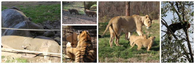 Columbus Zoo Fall 2015