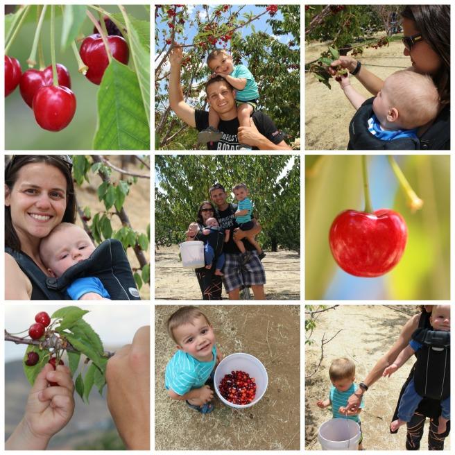 Cherry Picking 2
