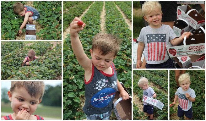 kids berry picking